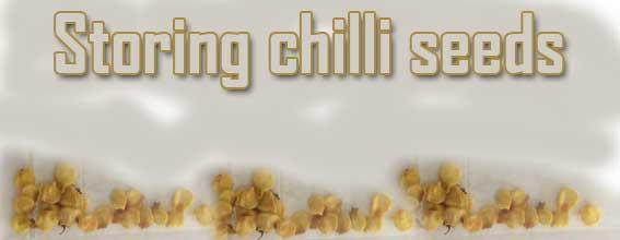Storing chilli seeds